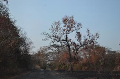 Jalan masuk ke dalam Taman Nasional Baluran