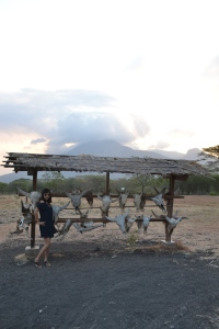 kepala banteng di savana bekol